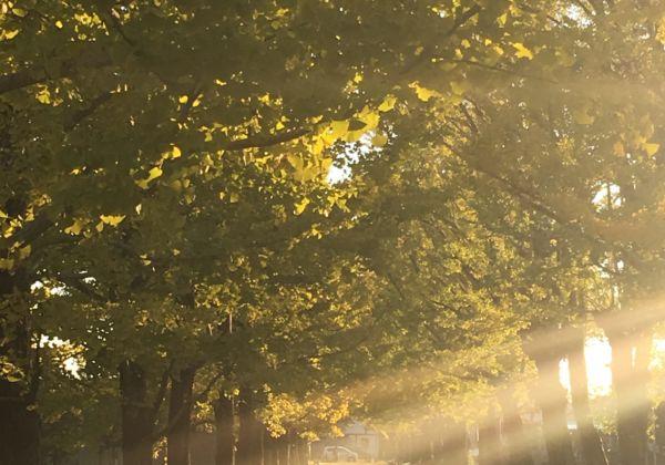 季節を心地よく過ごすアロマ~香りで寒さ対策・ゆず精油~