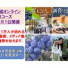 「集客編オンライン3か月コース」は2月15日から受付開始
