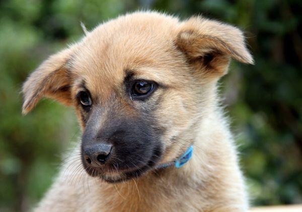 犬の飼い主さん必見!臆病な犬、気管虚脱の犬にハーネスがよい理由